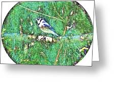 Blue Jay 8 Greeting Card