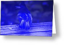 Blue Jay Has The Blues Greeting Card