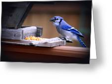 Blue Jay On Backyard Feeder Greeting Card