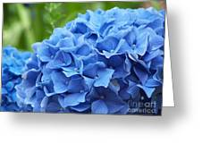 Blue Madeira Hydrangea Greeting Card