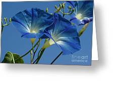 Blue Morning Greeting Card