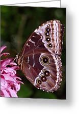 Blue Morpho Butterfly On Flower Greeting Card
