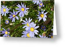 Blue Mums Greeting Card
