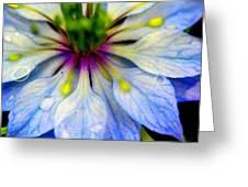 Blue Nigella Greeting Card