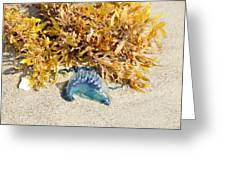 Blue On The Beach Greeting Card