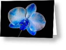 Blue Orchid Bloom Greeting Card