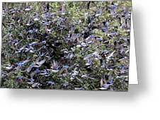 Blue Over Grey Greeting Card