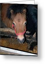 Blue Pony Eyes Greeting Card