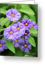 Blue Potato Bush Greeting Card