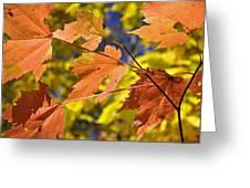 Blue Ridge Autumn Leaves 1.0 Greeting Card