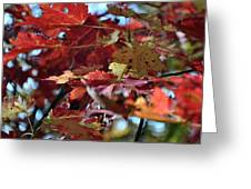 Blue Ridge Autumn Leaves 1.1 Greeting Card
