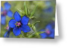 Blue Royalty Greeting Card