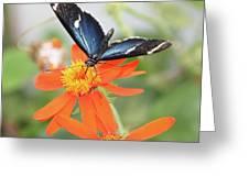 Blue Sara On Orange Sunflower Greeting Card