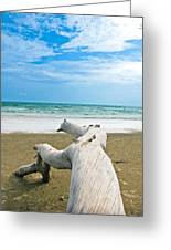 Blue Sea And Sky With Log On The Beach Greeting Card