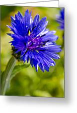 Blue Single Cornflower Greeting Card