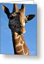 Blue Sky Giraffe Greeting Card