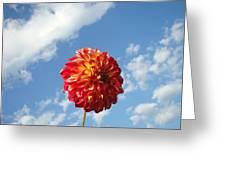 Blue Sky Nature Art Prinst Red Dahlia Flower Greeting Card