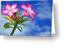 Blue Sky Pink Flower Greeting Card