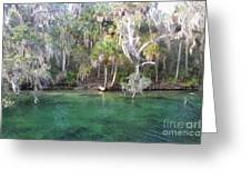Blue Spring State Park Florida Greeting Card