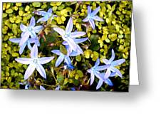 Blue Star Flowers Greeting Card