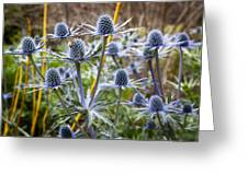 Blue Stem Sea Holly Greeting Card