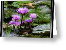 Blue Tropical Water Lilies Greeting Card