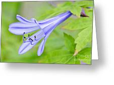 Blue Trumpet Greeting Card by David Lade