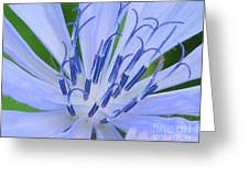 Blue Wild Flower Greeting Card