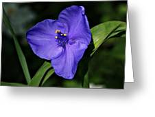 Blue Wildflower 6 Greeting Card