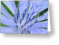 Blue Wildflower Greeting Card
