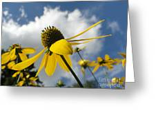Blue Yeller Greeting Card