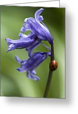 Bluebell And Ladybird Greeting Card