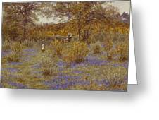 Bluebell Copse Greeting Card