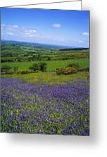 Bluebell Flowers On A Landscape, County Greeting Card