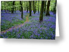 Bluebell Wood, Near Boyle, Co Greeting Card