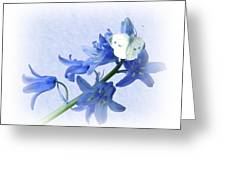 Bluebells And Butterflies Greeting Card