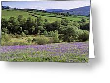 Bluebells In A Field, Sally Gap, County Greeting Card