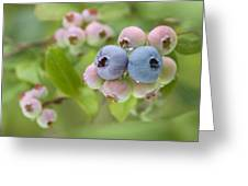 Blueberries (vaccinium Sp.) Greeting Card
