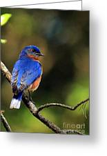 Bluebird 4 Greeting Card
