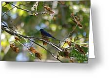 Bluebird At Rest Greeting Card