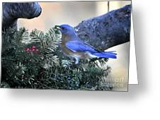 Bluebird Christmas Wreath Greeting Card