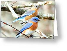 Bluebird Couple Greeting Card