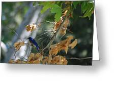 Bluebird On A Limb Greeting Card