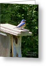Bluebirds Make Me Happy Greeting Card