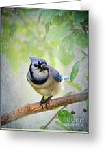 Bluejay In A Tree Greeting Card