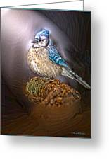 Bluejay In Spotlight Greeting Card