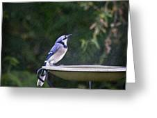 Bluejay In The Rain - Artist Cris Hayes Greeting Card