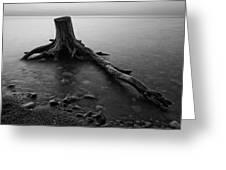 Bluffs Beach Stump Black And White  Greeting Card