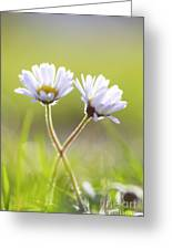 Blumen Liebe Greeting Card
