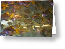Blurred Image Of Fish Swimming In An Greeting Card